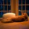 14-June-2012 Maple Cat at Five A.M. (Imagination)